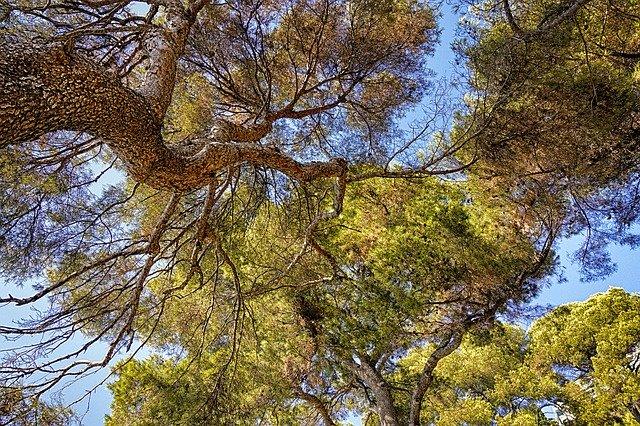 trees-1372608_640